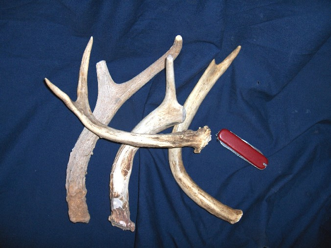 Jack Chaw Junior deer antlers for dog