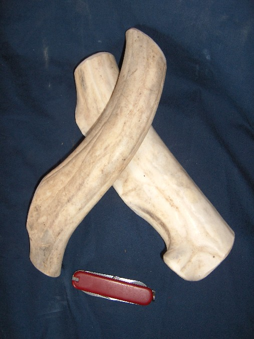 caribou or rein deer antler chew toy