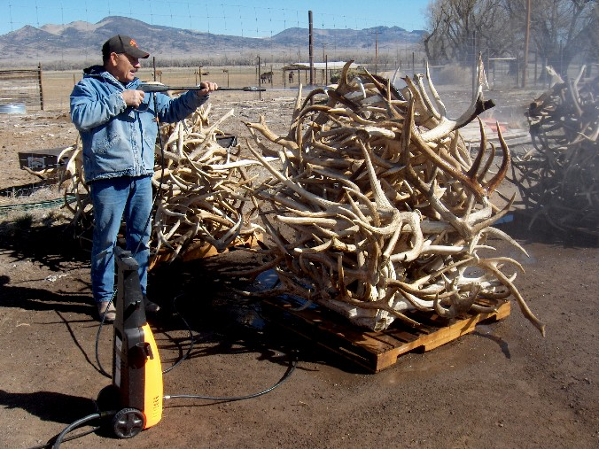 Cleaning antlers prior to making antler dog chews