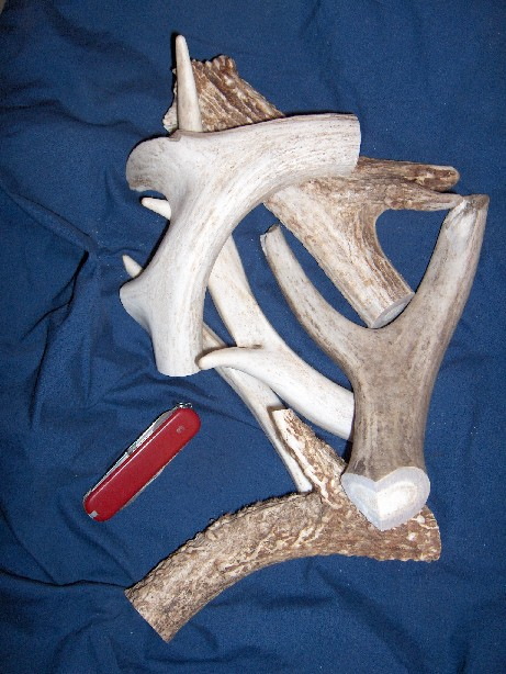 deer antler chew for dogs